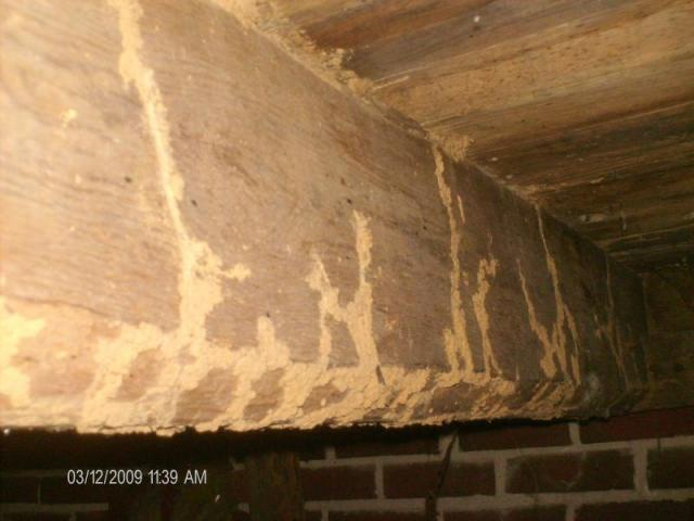Evidence of Wood Destroying Insect Damage